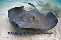 Marine Life Injuries Course - VIRTUAL CLASS